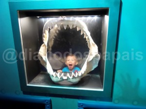 seaworld shark jaw
